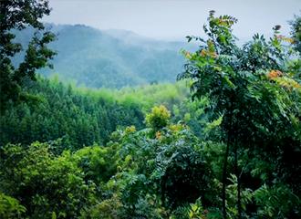 赣茶・寻茶 | 茶人的信念 鲜叶的魅力